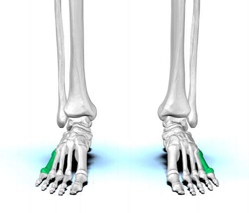 Metatarsal bone